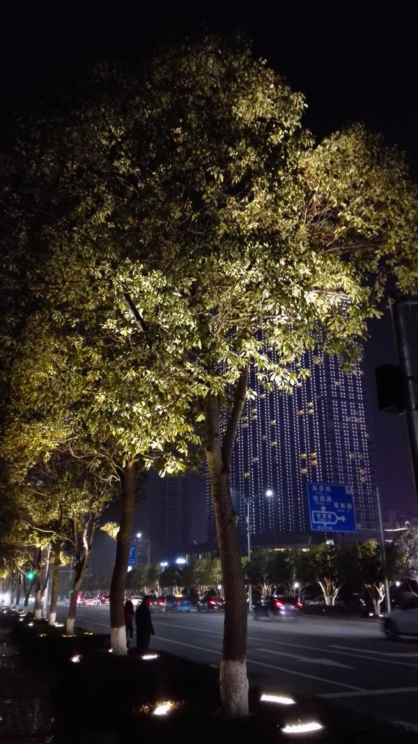 植物灯光照明夜景图片 - 江西亮化设计 - led博客,led