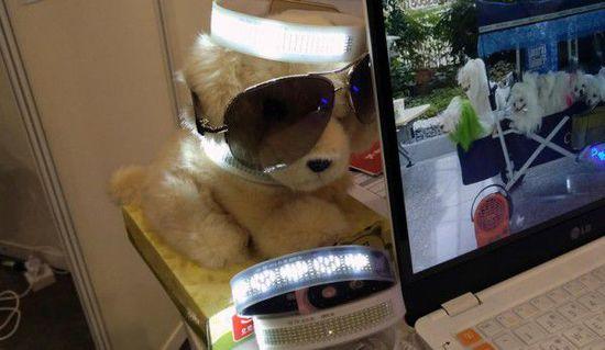 Neo Pop LED项圈帮你找回宠物