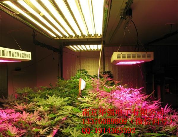 植物生长灯价格和功能介绍促生长,增产量