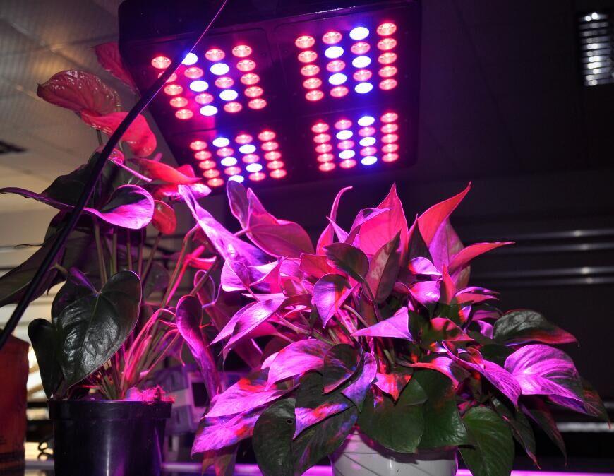 LED植物生长灯  高功率LED植物灯
